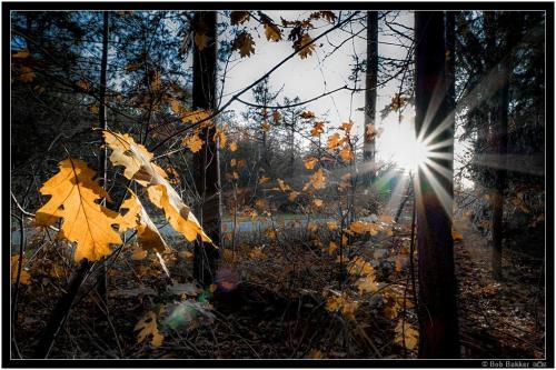 Bob Bakker   Herfst Tegenlicht (1)