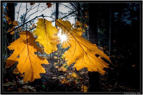 Bob Bakker   Herfst Tegenlicht (2)