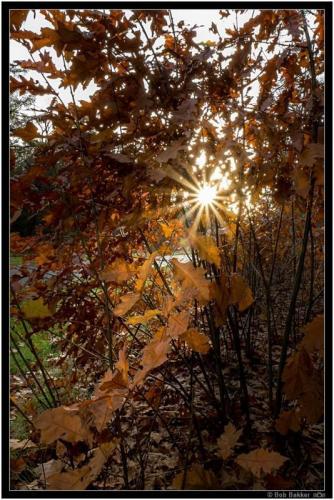 Bob Bakker   Herfst Tegenlicht (3)