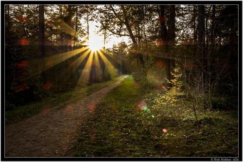 Bob Bakker   Herfst Tegenlicht (5)