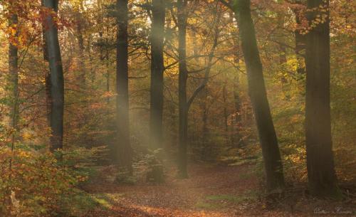 De herfst ochtendlicht in November (1)