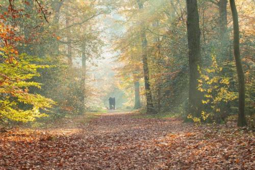 De herfst ochtendlicht in November (2)
