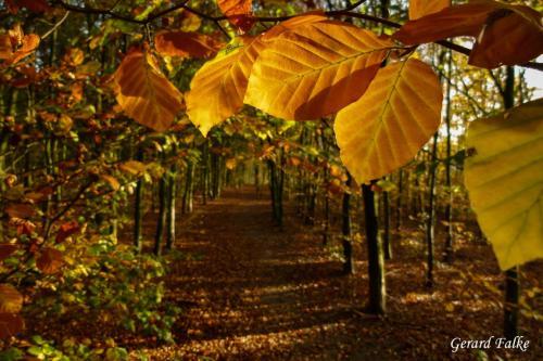 Gerard Falke - Herfst tegenlicht (1)