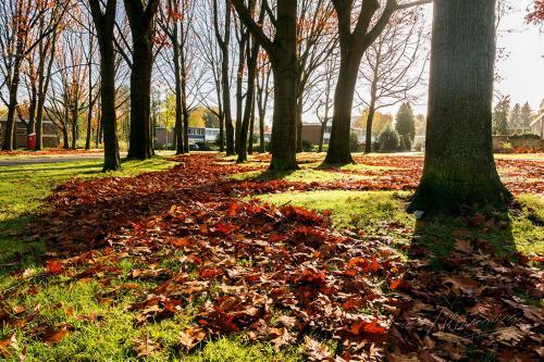 Herman Lambers - Herfst tegenlicht (1)