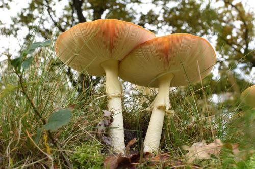 Johan Heijnen - paddenstoelen (5)