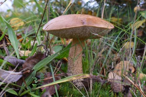 Johan Heijnen - paddenstoelen (6)