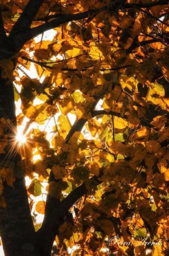 Petra Arends - Herfst tegenlicht (1)