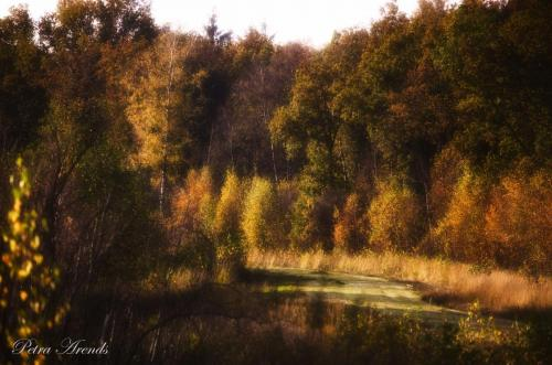 Petra Arends - Herfst tegenlicht (2)