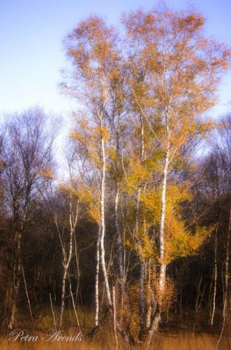 Petra Arends - Herfst tegenlicht (3)