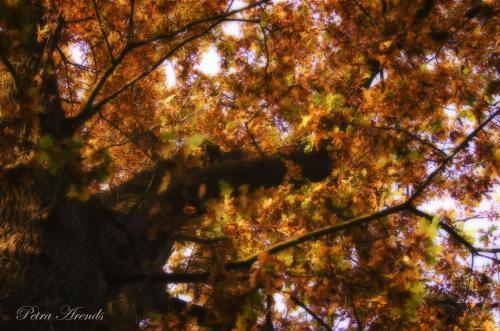 Petra Arends - Herfst tegenlicht (4)